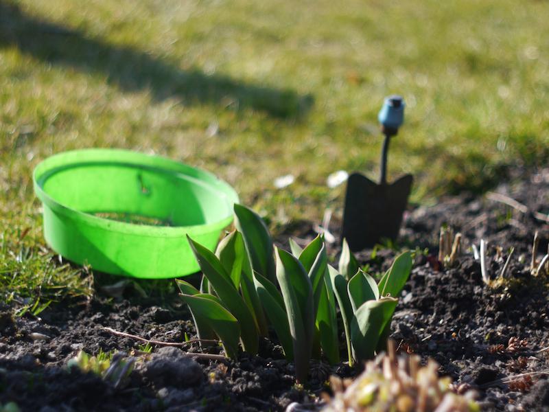 Garten-Tools eines Hobby-Gärtners