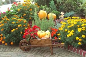 Gartenpflege im Herbst