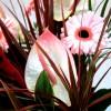Exotische Pflanzen fürs Zuhause