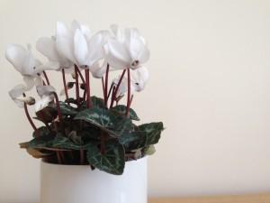 Beste Topfblumen fürs Zuhause