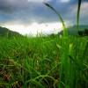 Rasen - ein pflegebedürftiger Gartenteppich