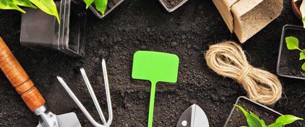 Eigene Pflanzen ziehen - So gelingt das Vorhaben